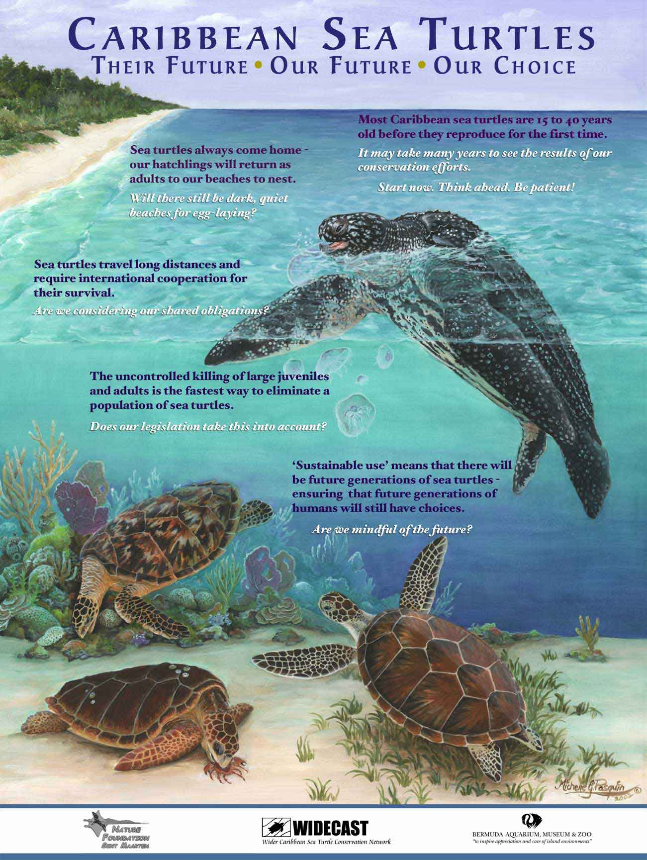 an overview of the animals sea turtles and the conservation efforts in american continent 15 million years ago and to have entered the american continent in the early sea turtles, including the huge conservation efforts often focus on.